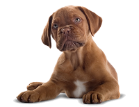 nera-pas00 pet shop nera